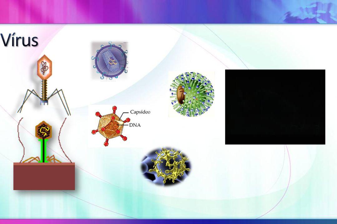 Louis Pasteur - ± 1895 -> Provou com seus experimentos que um meio estéril em contato com o ar contaminado, permitia a proliferação de microrganismos, logo, a teoria da abiogênese caiu por terra.