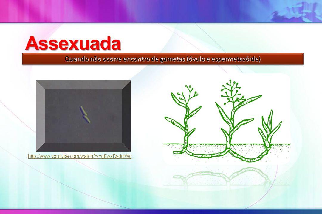 Assexuada Quando não ocorre encontro de gametas (óvulo e espermetazóide) http://www.youtube.com/watch?v=gEwzDydciWc