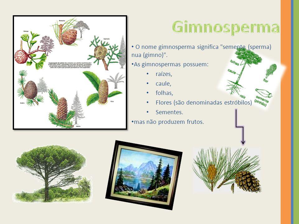 O nome gimnosperma significa