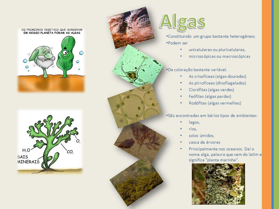 Grupo mais evoluído entre os vegetais superiores.