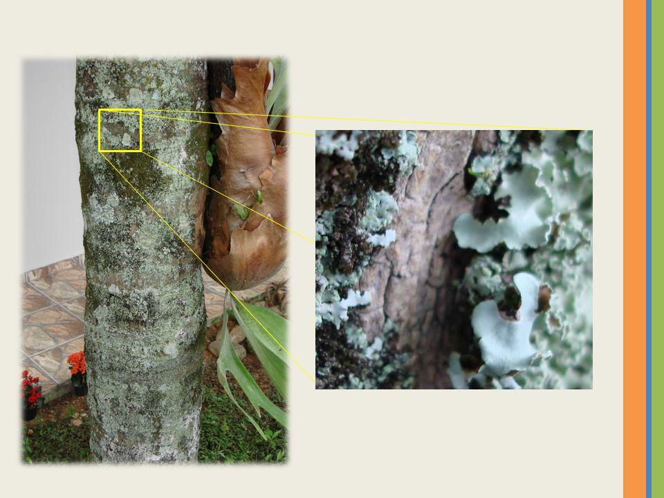 ReinoVegetalGrupoAngiospermas Representante Obtenção de nutrientes A distribuição de nutrientes é feita pelos vasos condutores.