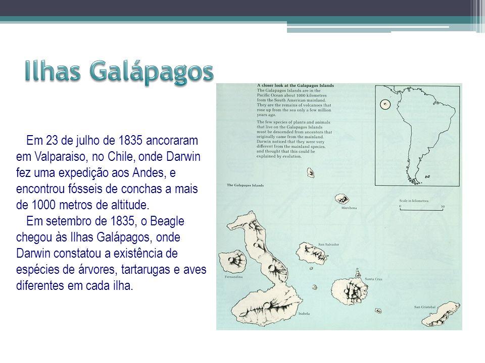 Em 23 de julho de 1835 ancoraram em Valparaiso, no Chile, onde Darwin fez uma expedição aos Andes, e encontrou fósseis de conchas a mais de 1000 metro