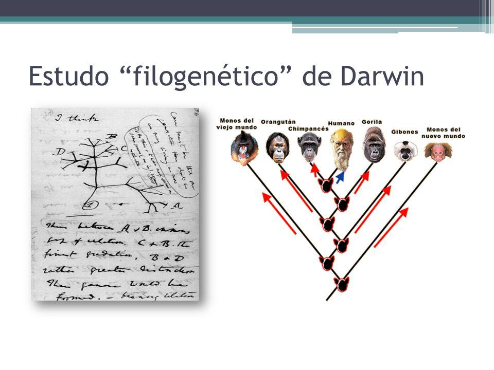 Estudo filogenético de Darwin
