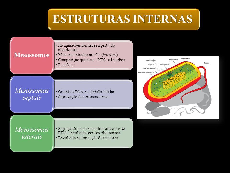 ESTRUTURAS INTERNAS Invaginações formadas a partir do citoplasma. Mais encontradas nas G+ (bacillus) Composição química – PTNs e Lipídios Funções: Mes