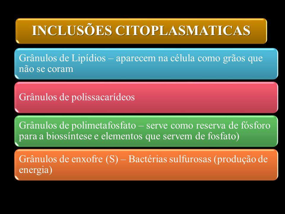 INCLUSÕES CITOPLASMATICAS Grânulos de Lipídios – aparecem na célula como grãos que não se coram Grânulos de polissacarídeos Grânulos de polimetafosfat