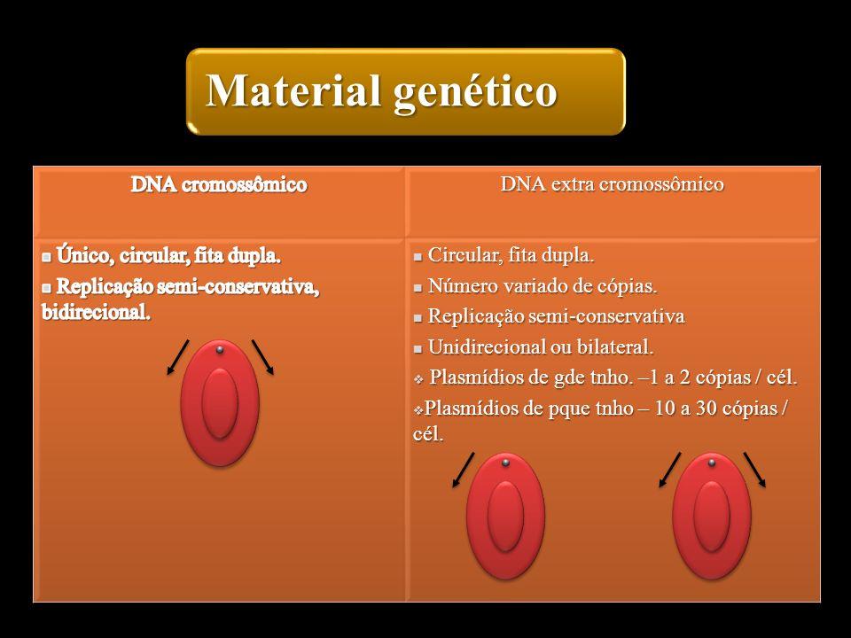 Material genético 18
