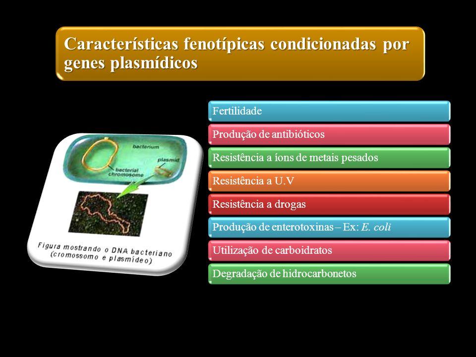 Características fenotípicas condicionadas por genes plasmídicos FertilidadeProdução de antibióticosResistência a íons de metais pesadosResistência a U