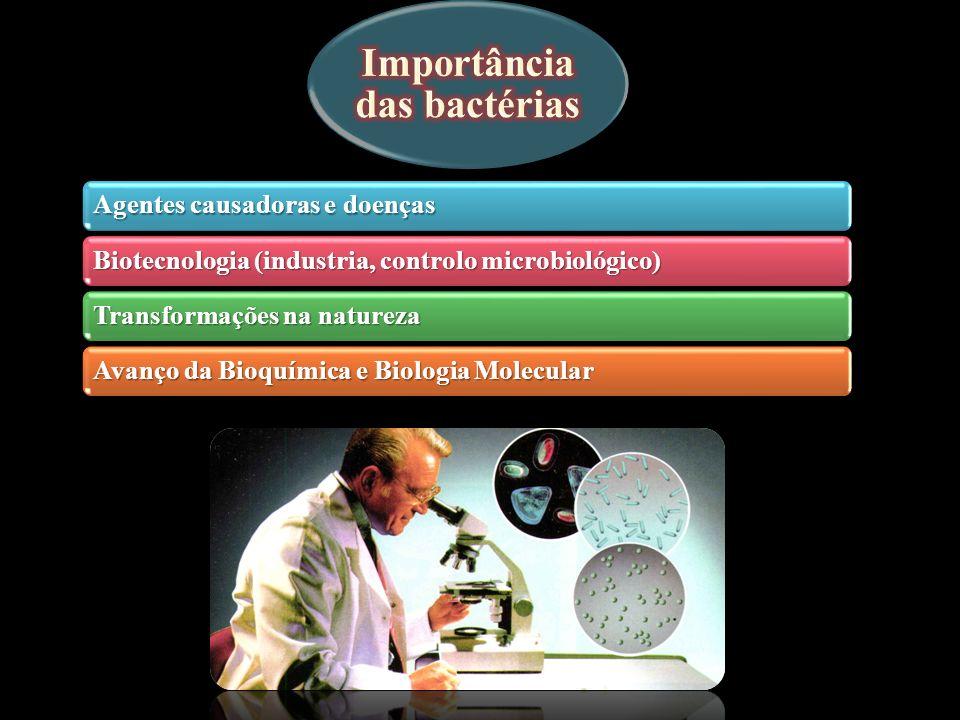 Formas e arranjos das células bacterianas 5 espirilo