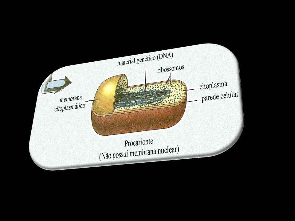 Estrutura da célula bacteriana I – Apêndices Flagelo Número variávelNúmero variável FacultativoFacultativo Composição química – flagelina (PTN)Composição química – flagelina (PTN) Função – mobilidadeFunção – mobilidade Pili ou fimbrias Geralmente nas Gram negativasGeralmente nas Gram negativas NumerososNumerosos Podem estar ou não presentesPodem estar ou não presentes Pili sexual – 1 a 3 / cel.