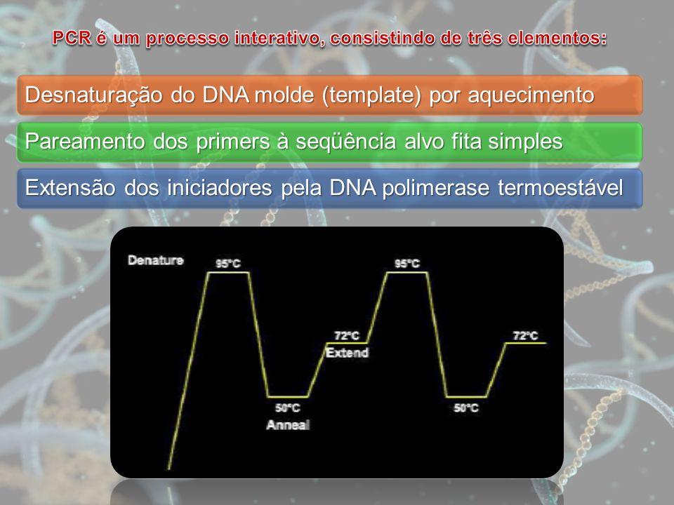 Desnaturação do DNA molde (template) por aquecimento Pareamento dos primers à seqüência alvo fita simples Extensão dos iniciadores pela DNA polimerase