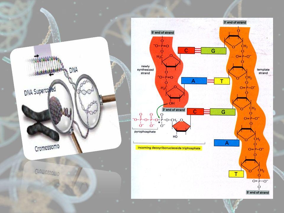PCR requer 7 componentes essenciais: DNA polimerase termoestável Um par de oligonucleotídeos para iniciar a síntese de DNA ( primers) Deoxinucleotídeos trifosfato (dNTPs)Cátion divalente: toda DNA polimeraseRequer cátion divalente, usualmente Mg2+ Tampão para manter o pHCátions monovalentes, usualmente K + (KCl)DNA molde