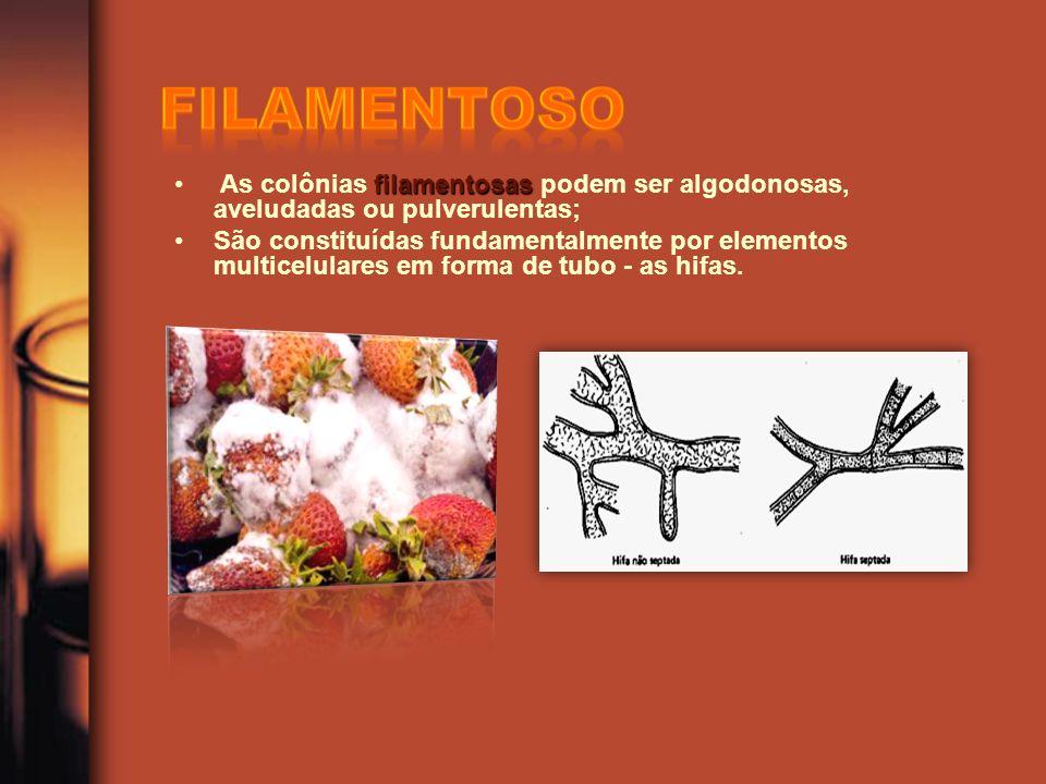 filamentosas As colônias filamentosas podem ser algodonosas, aveludadas ou pulverulentas; São constituídas fundamentalmente por elementos multicelular