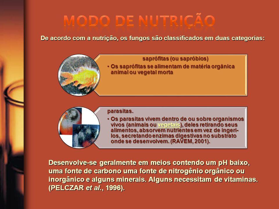 saprófitas (ou sapróbios) Os saprófitas se alimentam de matéria orgânica animal ou vegetal mortaOs saprófitas se alimentam de matéria orgânica animal