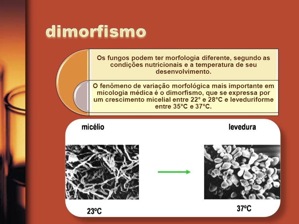 Os fungos podem ter morfologia diferente, segundo as condições nutricionais e a temperatura de seu desenvolvimento. O fenômeno de variação morfológica
