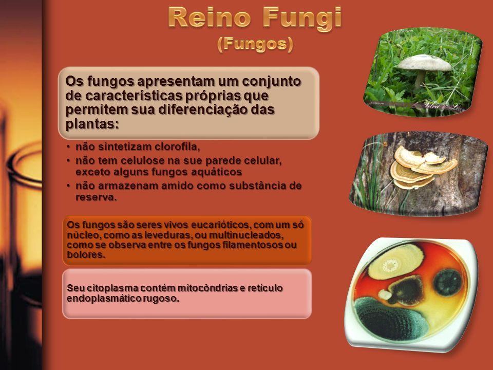 Os fungos apresentam um conjunto de características próprias que permitem sua diferenciação das plantas: não sintetizam clorofila,não sintetizam cloro