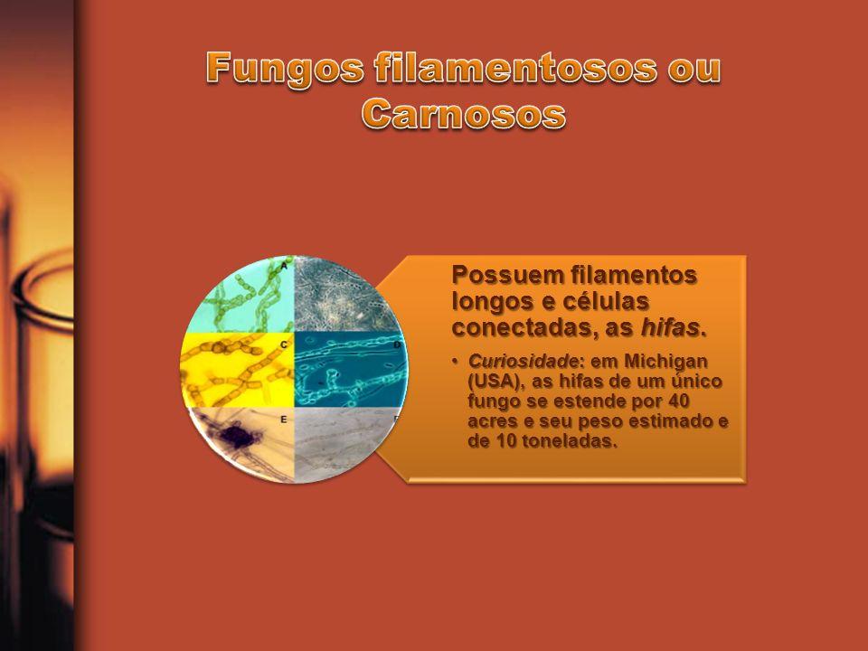 Os fungos são microrganismos heterotróficos A maioria são aeróbios obrigatórios As leveduras fermentadoras são aeróbias facultativas, se desenvolvem em ambientes com pouco oxigênio ou mesmo na ausência deste elemento.