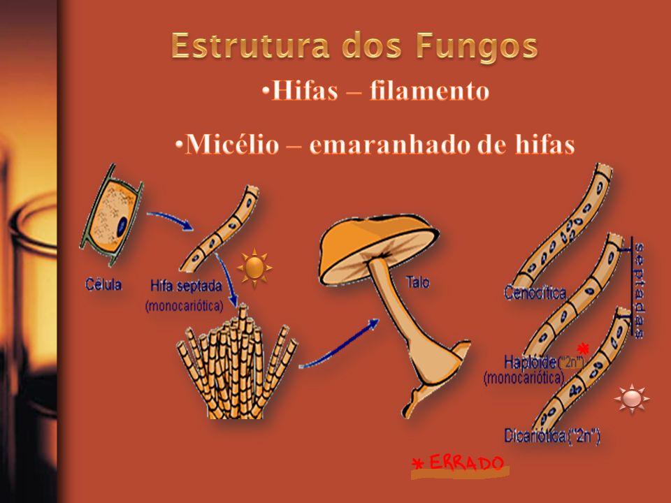 Os fungos podem ter morfologia diferente, segundo as condições nutricionais e a temperatura de seu desenvolvimento.