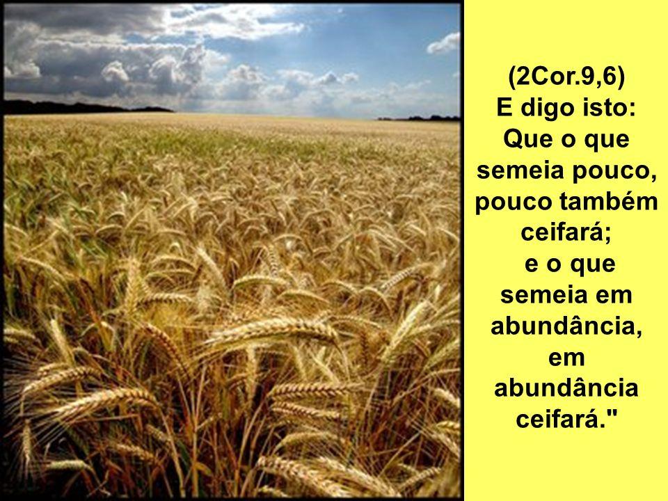 (2Cor.9,6) E digo isto: Que o que semeia pouco, pouco também ceifará; e o que semeia em abundância, em abundância ceifará.