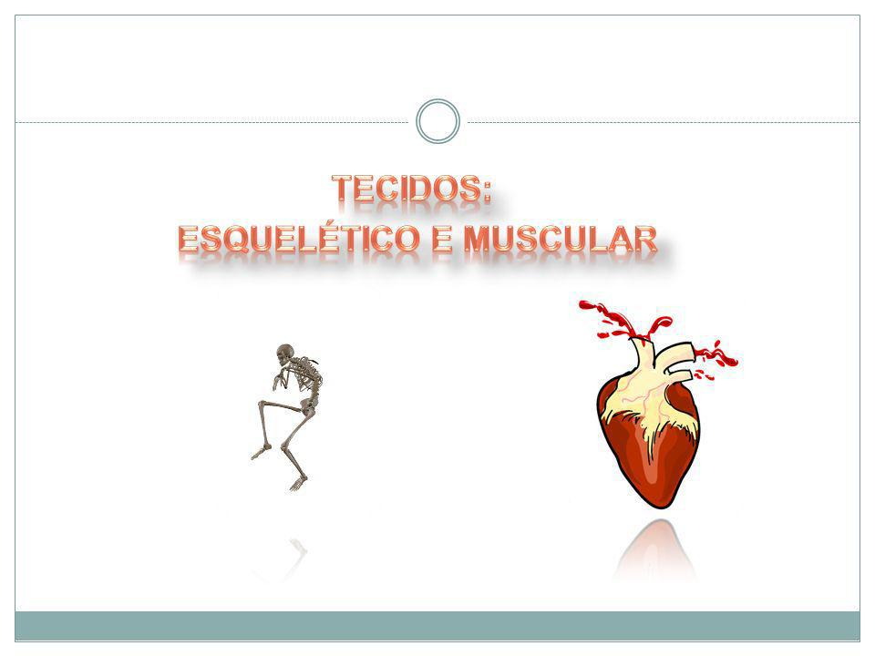 A contração do músculo esquelético ocorre pelo deslizamento dos filamentos de actina sobre os de miosina.A contração do músculo esquelético ocorre pelo deslizamento dos filamentos de actina sobre os de miosina.