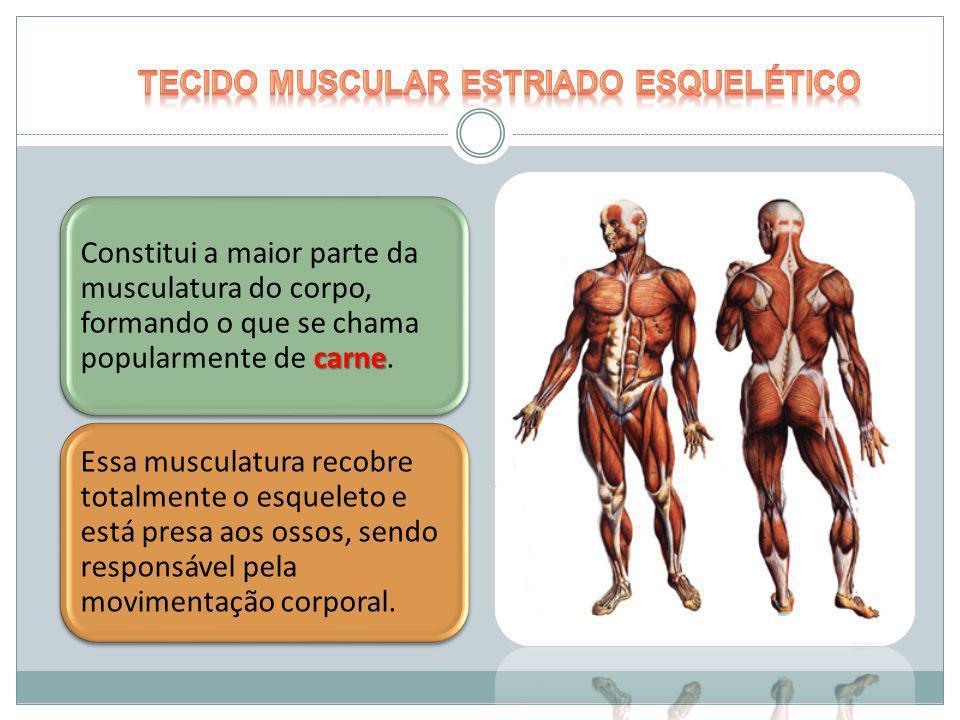 carne Constitui a maior parte da musculatura do corpo, formando o que se chama popularmente de carne. Essa musculatura recobre totalmente o esqueleto