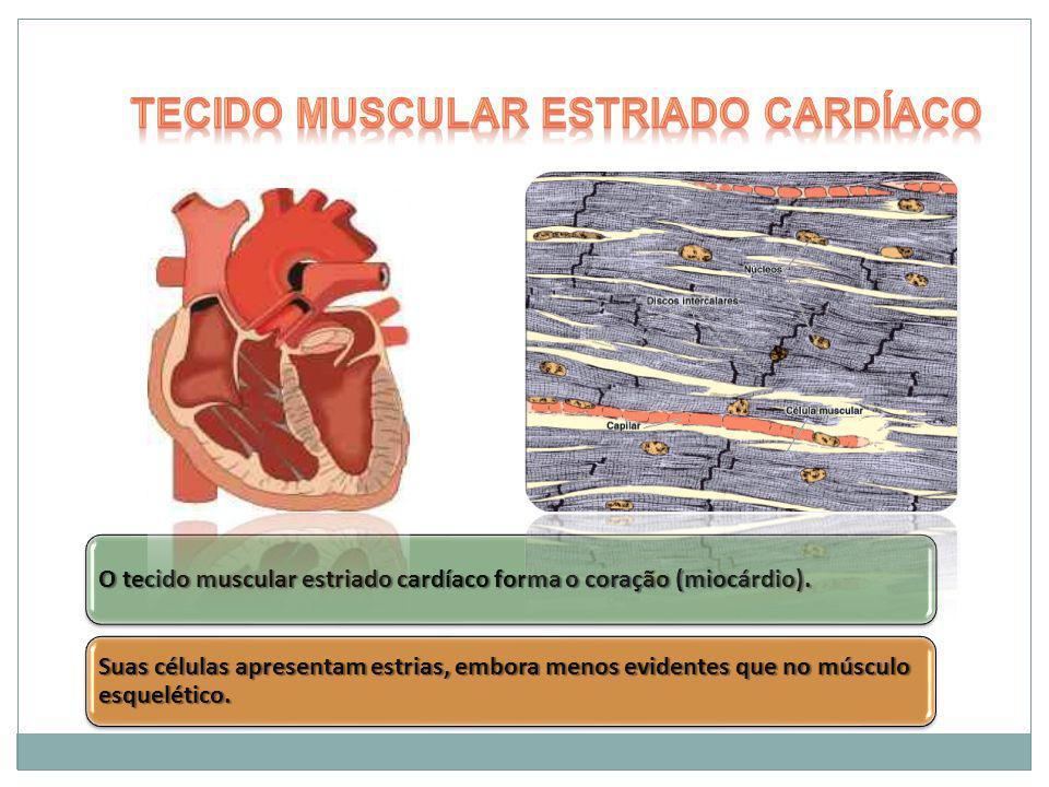 O tecido muscular estriado cardíaco forma o coração (miocárdio). Suas células apresentam estrias, embora menos evidentes que no músculo esquelético.