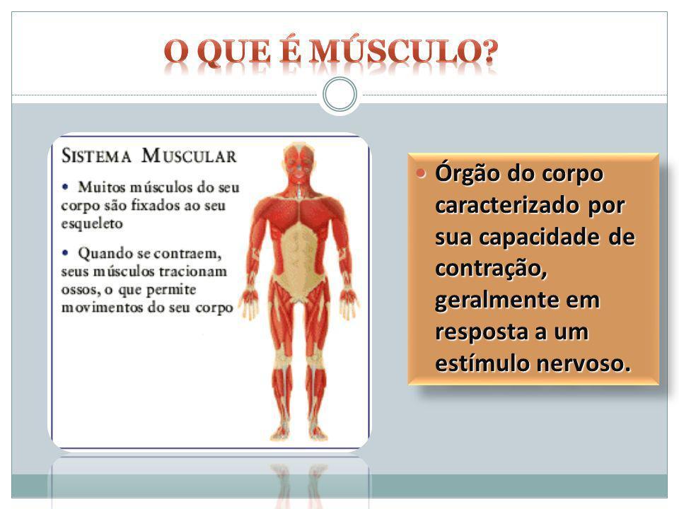 Órgão do corpo caracterizado por sua capacidade de contração, geralmente em resposta a um estímulo nervoso. Órgão do corpo caracterizado por sua capac