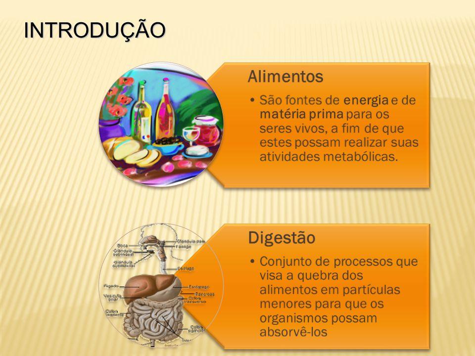 INTRODUÇÃO Alimentos São fontes de energia e de matéria prima para os seres vivos, a fim de que estes possam realizar suas atividades metabólicas. Dig