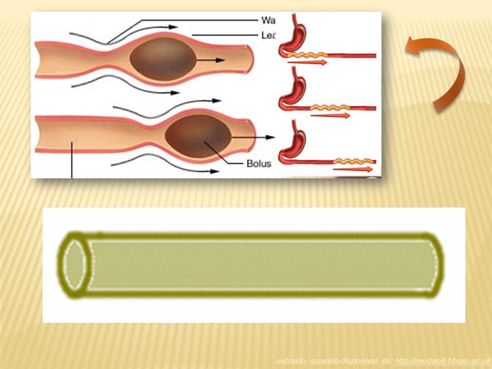 Intestino delgado Na primeira porção do intestino delgado se encontra o duodeno verifica-se a liberação da bile, suco pancreático suco entérico Onde ocorre a absorção das vitaminas lipossolúveisOnde ocorre a absorção das vitaminas lipossolúveis Intestino grosso Verifica-se absorção de H 2 O e formação das fezes.