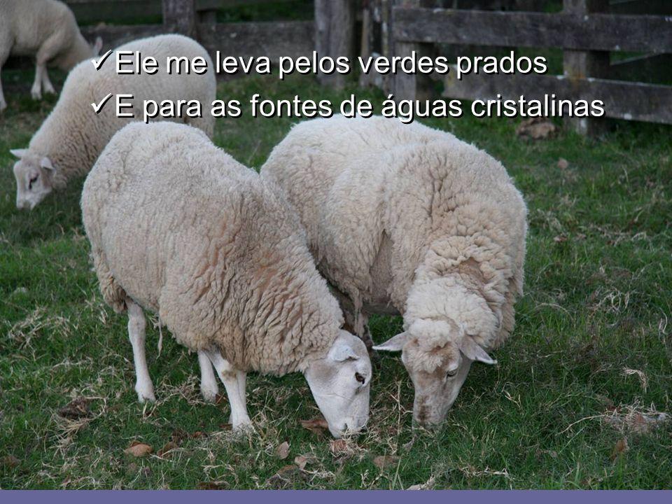 O Senhor Deus é meu pastor amado Eu me coloco em suas mãos divinas O Senhor Deus é meu pastor amado Eu me coloco em suas mãos divinas