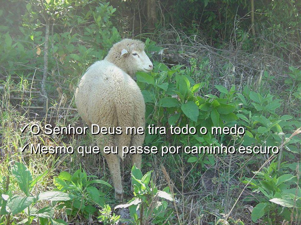 /:O Senhor Deus é meu Pastor E Nada pode me faltar:/ /:O Senhor Deus é meu Pastor E Nada pode me faltar:/