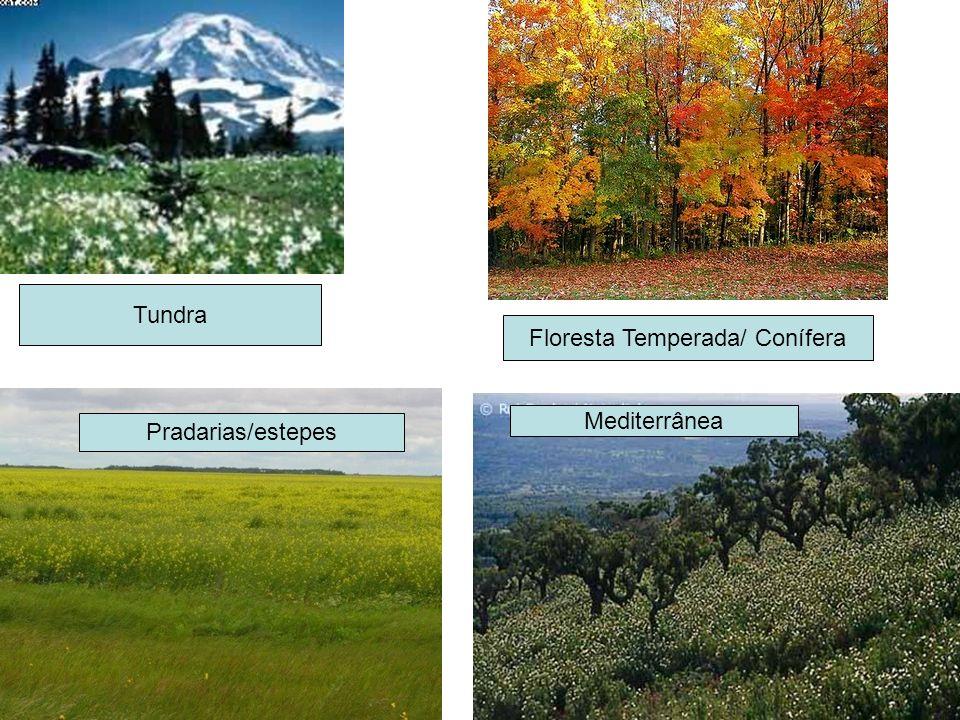 Tundra Floresta Temperada/ Conífera Pradarias/estepes Mediterrânea