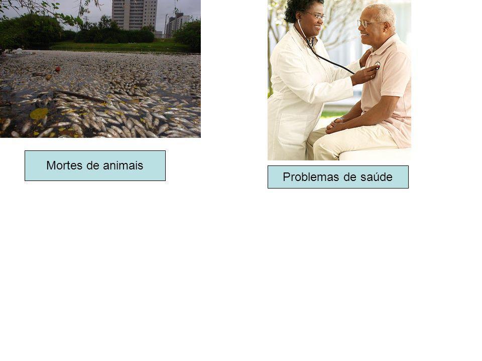 Mortes de animais Problemas de saúde