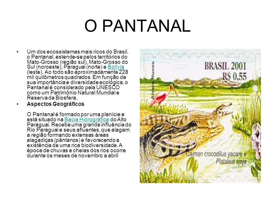 O PANTANAL Um dos ecossistemas mais ricos do Brasil, o Pantanal, estende-se pelos territórios do Mato-Grosso (região sul), Mato-Grosso do Sul (noroest