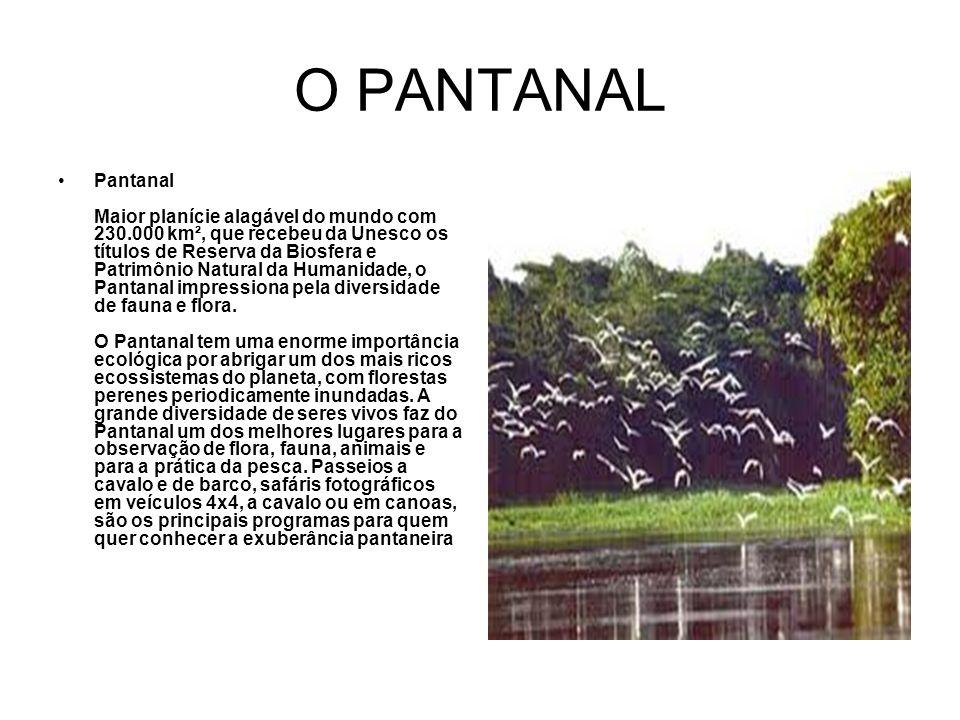 O PANTANAL Pantanal Maior planície alagável do mundo com 230.000 km², que recebeu da Unesco os títulos de Reserva da Biosfera e Patrimônio Natural da