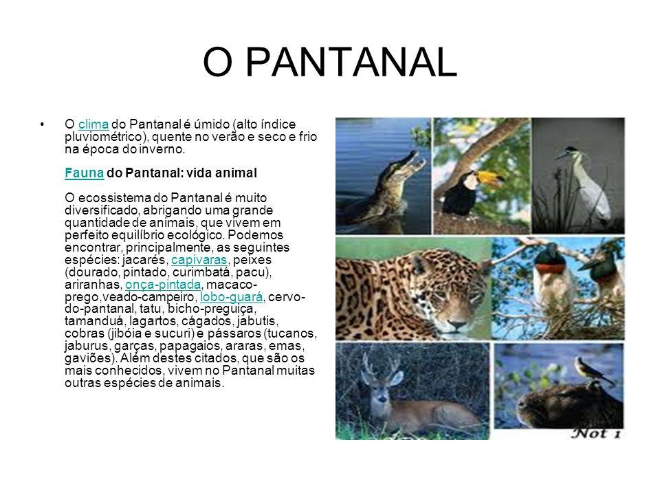 O PANTANAL O clima do Pantanal é úmido (alto índice pluviométrico), quente no verão e seco e frio na época do inverno. Fauna do Pantanal: vida animal