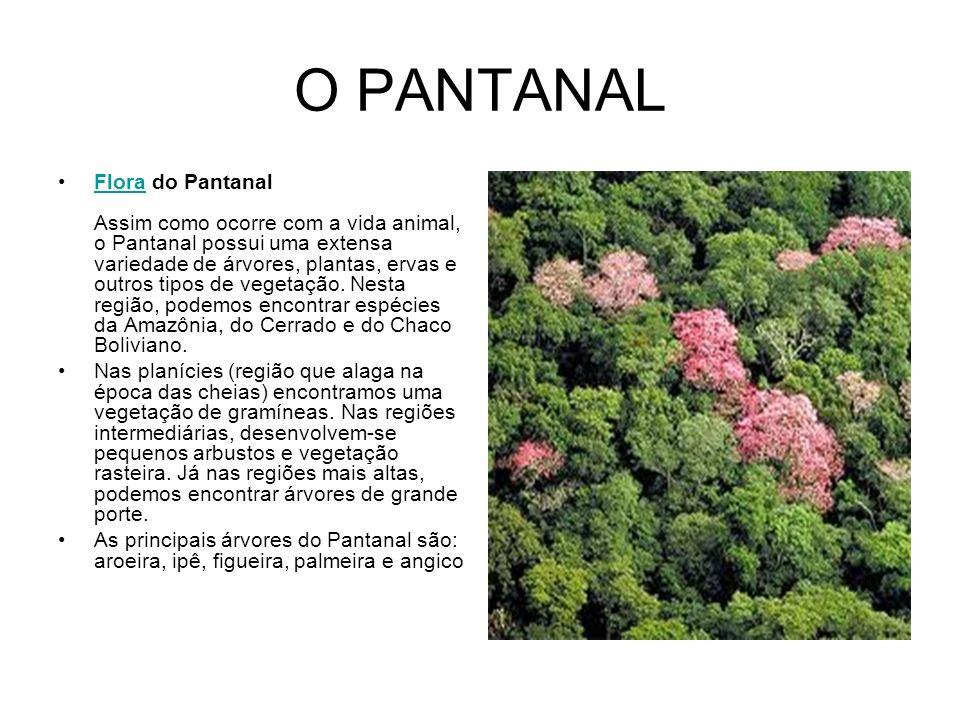 O PANTANAL Flora do Pantanal Assim como ocorre com a vida animal, o Pantanal possui uma extensa variedade de árvores, plantas, ervas e outros tipos de