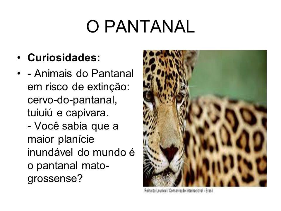 O PANTANAL Curiosidades: - Animais do Pantanal em risco de extinção: cervo-do-pantanal, tuiuiú e capivara. - Você sabia que a maior planície inundável