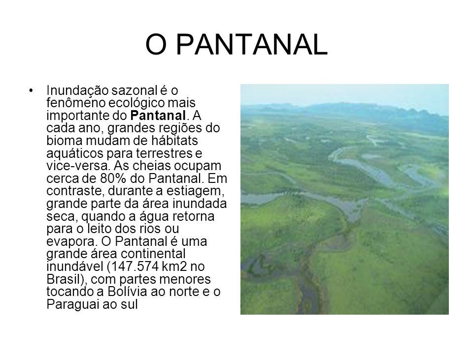 O PANTANAL Inundação sazonal é o fenômeno ecológico mais importante do Pantanal. A cada ano, grandes regiões do bioma mudam de hábitats aquáticos para