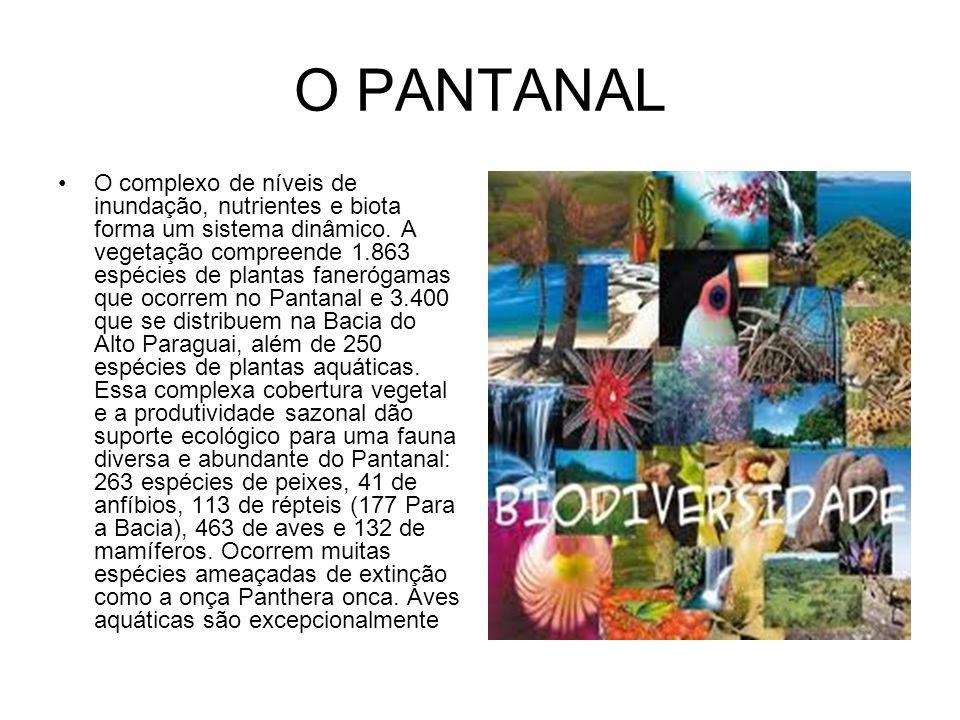 O PANTANAL O complexo de níveis de inundação, nutrientes e biota forma um sistema dinâmico. A vegetação compreende 1.863 espécies de plantas fanerógam