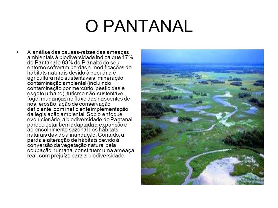 O PANTANAL A análise das causas-raízes das ameaças ambientais à biodiversidade indica que 17% do Pantanal e 63% do Planalto do seu entorno sofreram pe