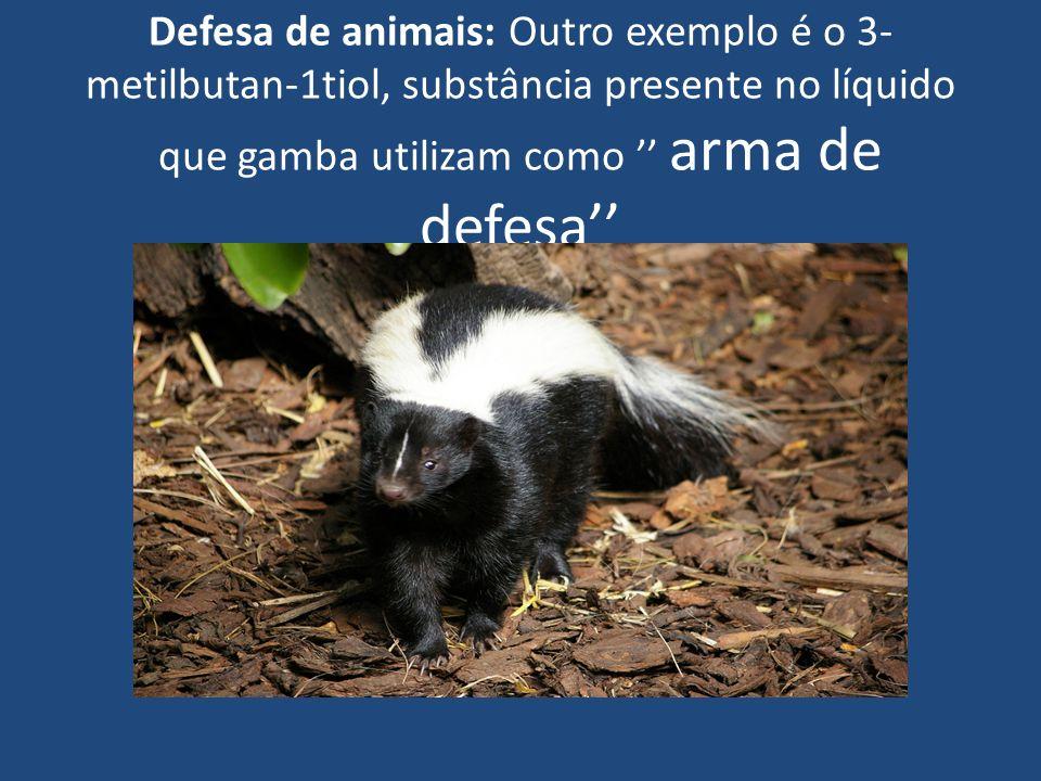 Defesa de animais: Outro exemplo é o 3- metilbutan-1tiol, substância presente no líquido que gamba utilizam como arma de defesa