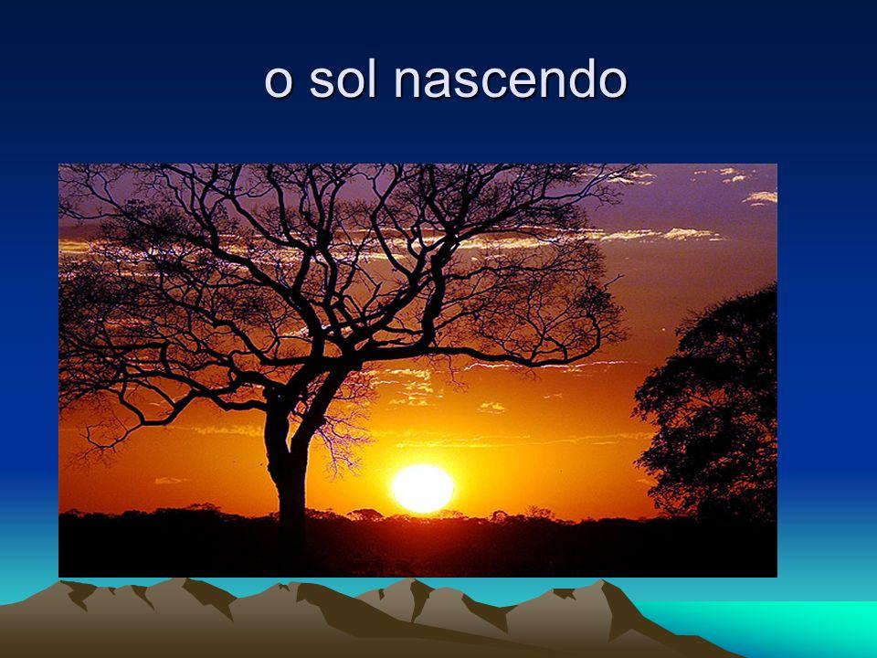 o sol nascendo o sol nascendo