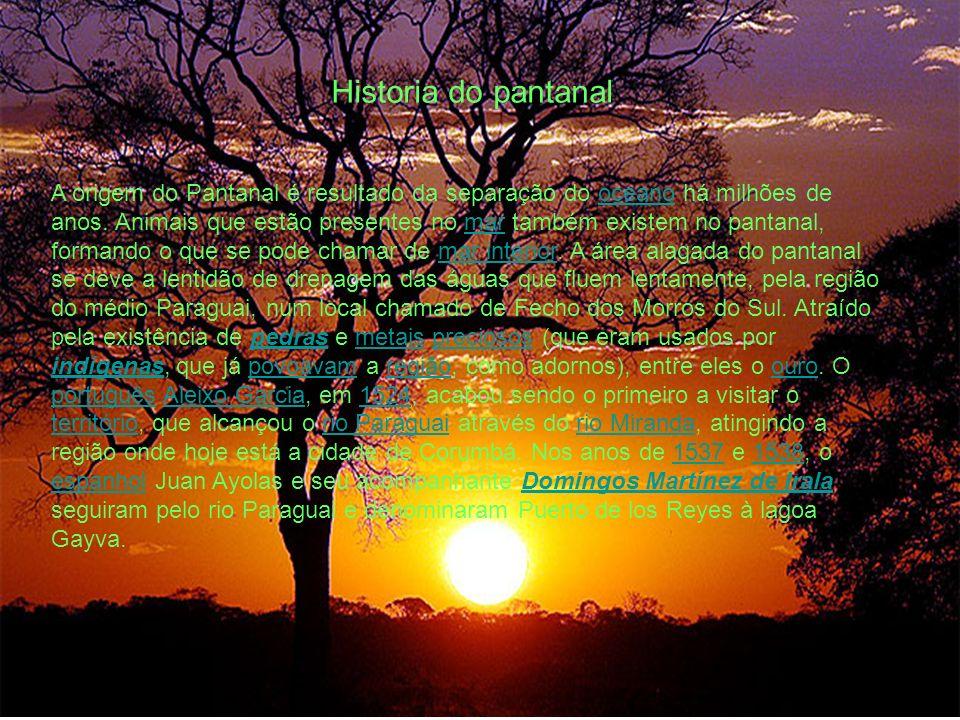 Historia do pantanal A origem do Pantanal é resultado da separação do oceano há milhões de anos. Animais que estão presentes no mar também existem no