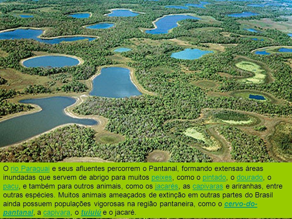 O rio Paraguai e seus afluentes percorrem o Pantanal, formando extensas áreas inundadas que servem de abrigo para muitos peixes, como o pintado, o dou