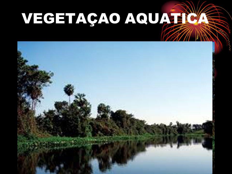 FAUNA DO PANTANAL A VIDA DOS ANIMAIS O ecossistema do Pantanal é muito diversificado, abrigando uma grande quantidade de animais, que vivem em perfeito equilíbrio ecológico.