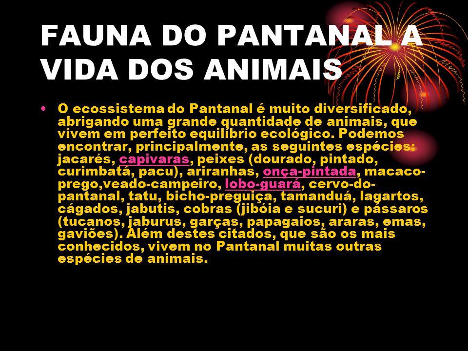 A FAUNA A VIDA DOS ANIMAIS