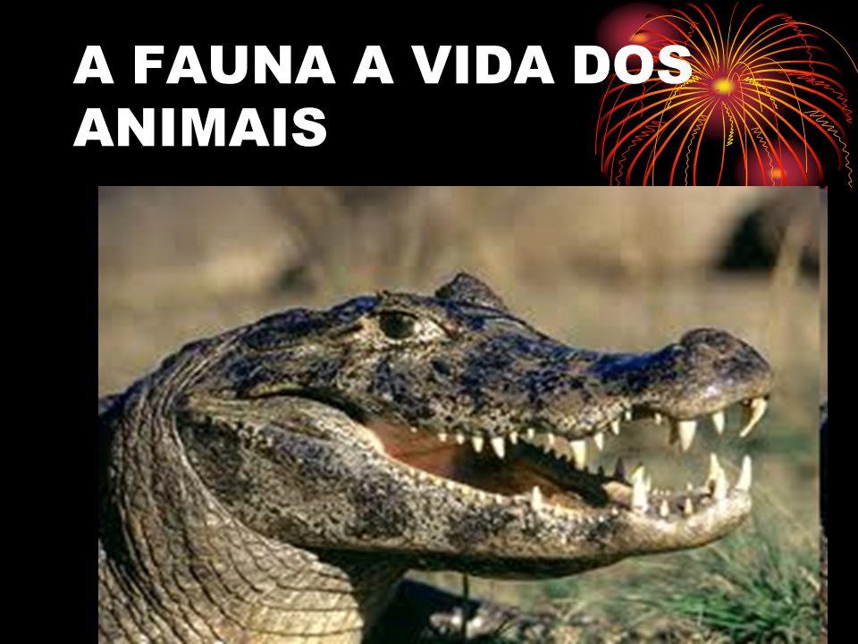 A FLORA DO PANTANAL Assim como ocorre com a vida animal, o Pantanal possui uma extensa variedade de árvores, plantas, ervas e outros tipos de vegetação.