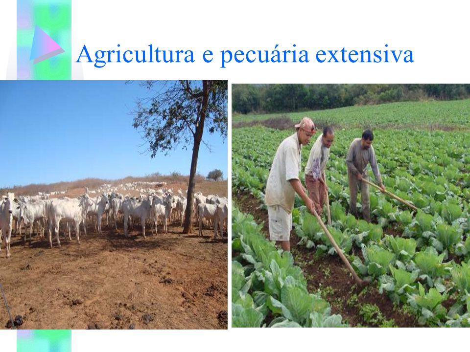 Agricultura e pecuária extensiva