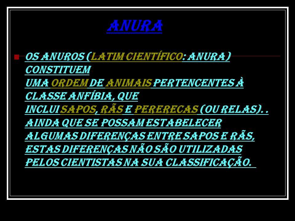 Anura Os anuros (latim científico: Anura) constituem uma ordem de animais pertencentes à classe Anfíbia, que inclui sapos, rãs e pererecas (ou relas).