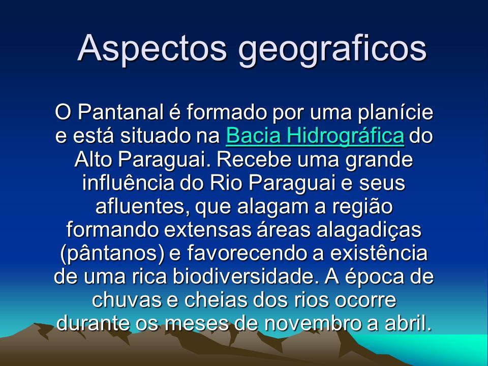 Aspectos geograficos O Pantanal é formado por uma planície e está situado na BBBB aaaa cccc iiii aaaa H H H H iiii dddd rrrr oooo gggg rrrr áááá ffff iiii cccc aaaa do Alto Paraguai.
